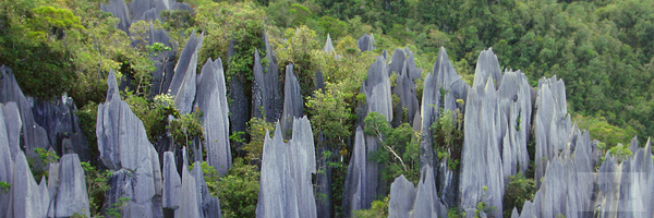 Mulu National Park Best Tourist Attractions And Places To Visit In Malaysia 2014