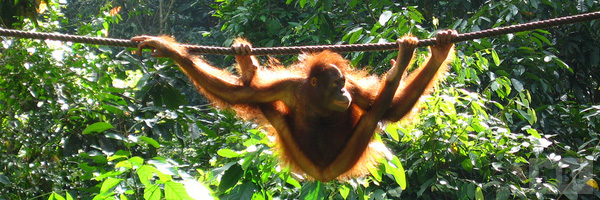 Sepilok Nature Reserve Best Tourist Attractions And Places To Visit In Malaysia 2014